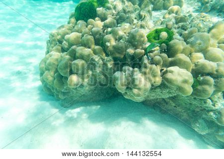 underwater life of green fish and hard coral in the sea and sand