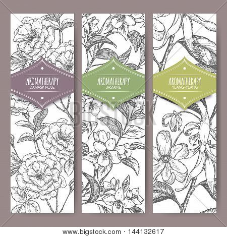 Set of three vector banners Damask rose, jasmine, ylang-ylang sketch. Aromatherapy series. Great for traditional medicine, perfume design, cooking or gardening.
