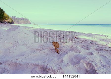 white sand sea and clear sky for relax vacation on vintage filter