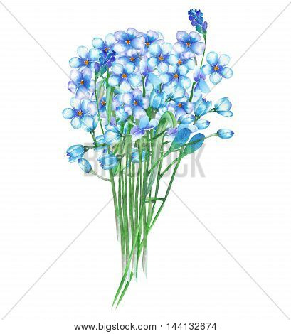 An illustration with an isolated bouquet of the beautiful watercolor blue forget-me-not flowers (Myosotis) on a white background