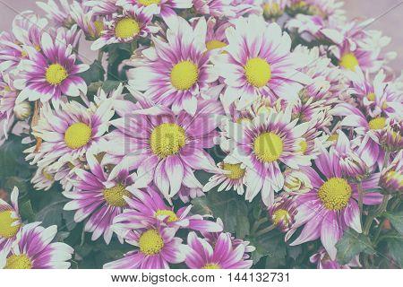 pink bouquet on vintage filter for background
