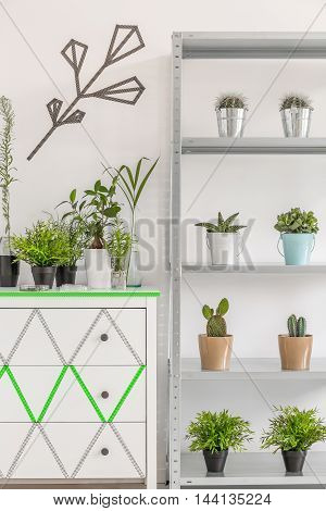 Great Idea To Display Your Houseplants