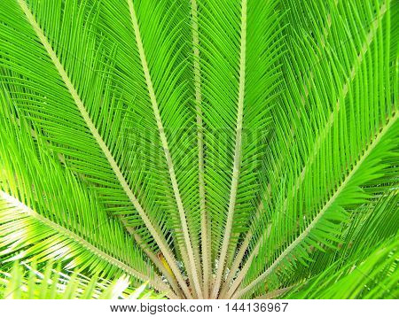 Beautiful young palm tree detail in a garden