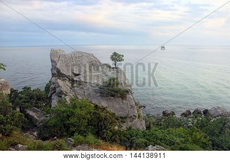 lonely crimean green pine on cliff on background of blue Black sea in Crimea