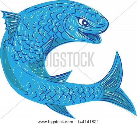 Drawing sketch style illustration of a mullet or grey mullet from a family Mugilidae in the order of ray-finned fish jumping viewed from the side set on isolated white background.