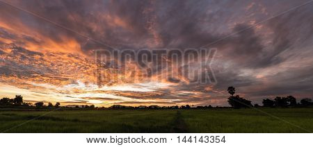Fantastic wheat field at the sunset. Colorful sky. golden ears of wheat or rye on sky background with clouds under the influence of sunlight. Rich harvest Concept. majestic rural landscape