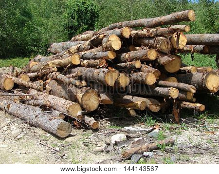 A stack of logs ready to be cut up for firewood.