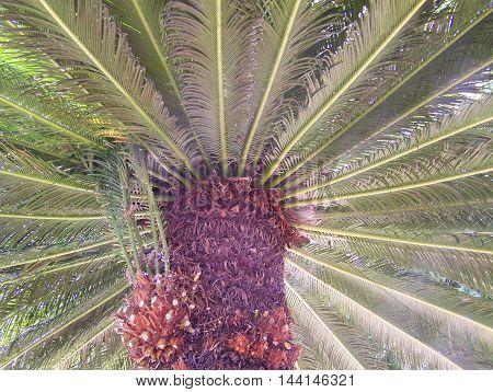 Tree palm leaves in a public garden