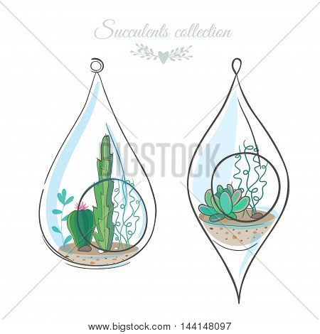 two floral compositions with cactuses and succulents in decorative glass terrariums