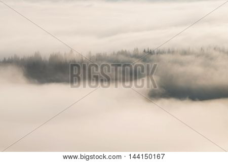 Foggy forest, at sunrise, at Bucovina - Romania