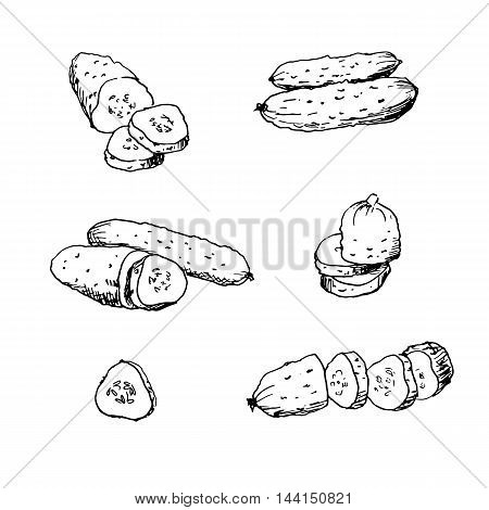 Hand drawn vector illustration of cucumbers. Isolated cucumber and sliced pieces. Vegetable engraved style illustration. Vegetarian food drawing.