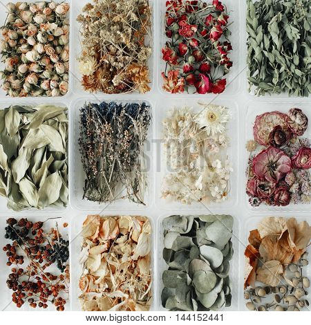 Assortment of dried flowers leaves and petals in boxes on white. flat lay top view