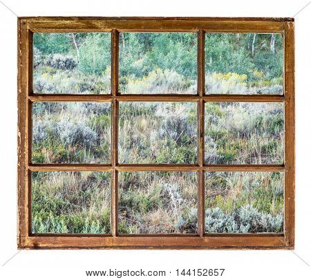 late summer tapestry of Colorado aspen, wildflowers and shrubs as seen from a sash window of old cabin
