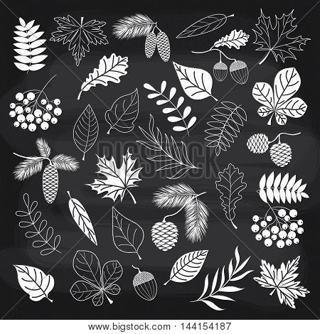 Vector autumn forest set with leaves and berries