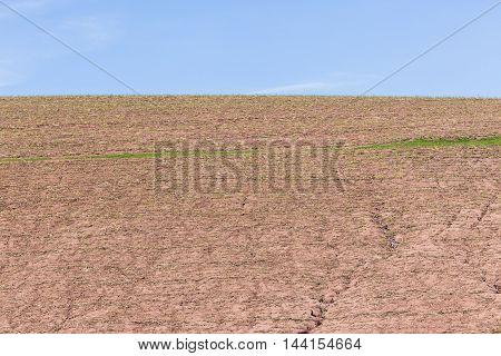 Farming Crops Landscape