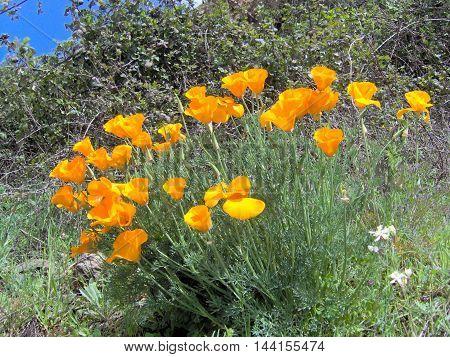 Flower, flowers, water, rose, garden, green, summer, springtime, colors, colorfull