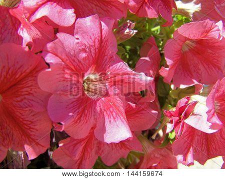 Several beautiful flowers in a public garden