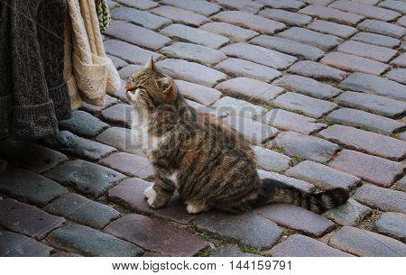City cat is walking on the street