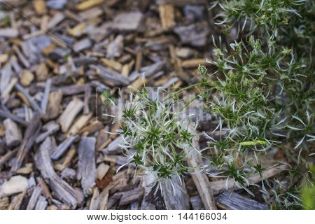 natural background of wood and greenery for your desktop