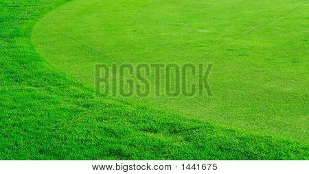 Campo de grama redonda no campo de golfe