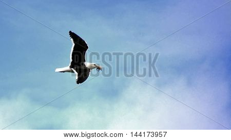 Seagulls in flight over a sky background