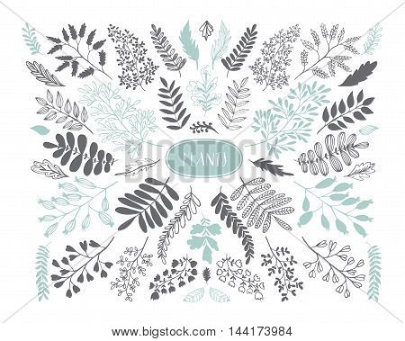 Collection of hand drawn leaves and branch. Ink illustration. Isolated on white background. Hand drawn nature elements.