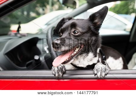 Close-up Of A Dog Looking Through Open Car Window