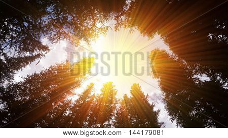 Sun shining effect through canopy of tall trees in the park