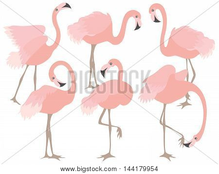 Vector cartoon beautiful elegant coral flamingo set