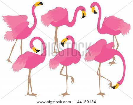 Vector cartoon beautiful elegant pink flamingo set
