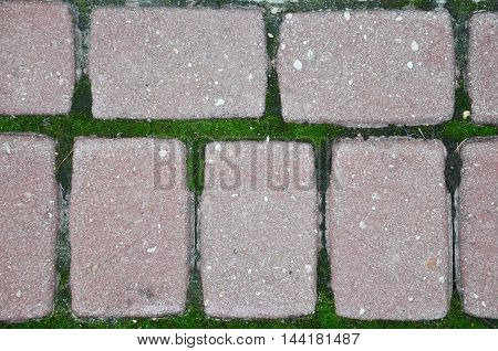 moss in the seams of the old pavers