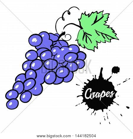 juicy bunch of ripe black grapes with green leaf