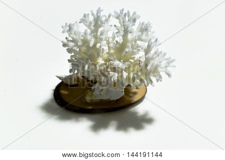 The white Coral from Maldives From the Ocean