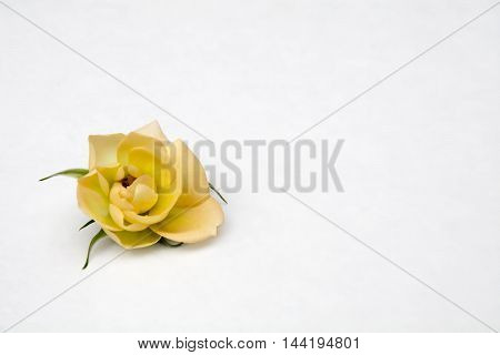yellow mini rose on white background for easter