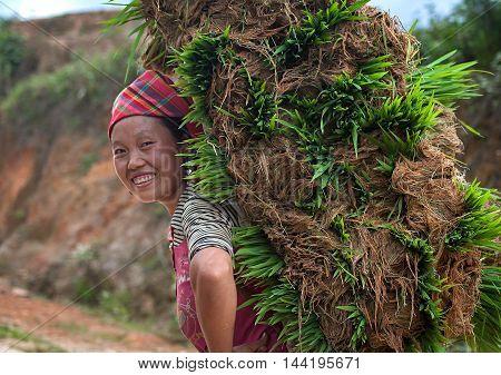YEN BAI, VIETNAM, July 24, 2016 ethnic Hmong woman, highland Yen Bai, Vietnam, the rice fields, rice cultivation