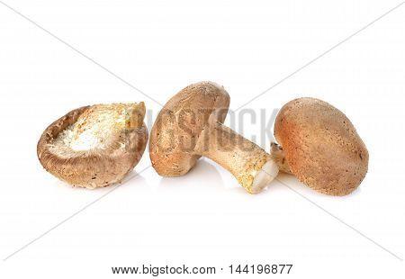 fresh Shiitake mushrooms on a white background