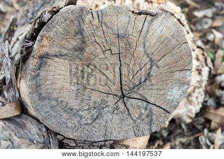 Small tree stump near the paddy field in the countryside of Thailand.(select focus)