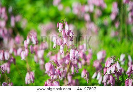 beautiful pink flowers growing in the flowerbed