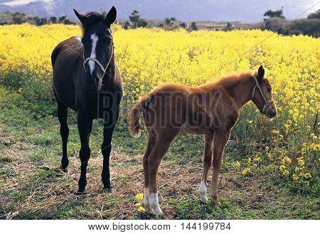 Two horses in the flower garden