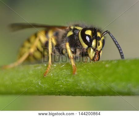 Wasp sits on long green leaf stalks