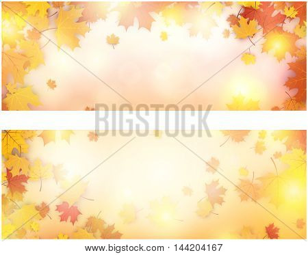 Autumn luminous banners set with golden maple leaves. Vector illustration.