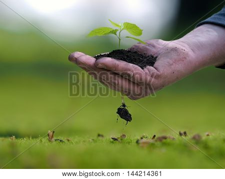 Man's hand holding a plant a handful of earth. The root of the little germ. The concept of ecology landscaping environmental protection