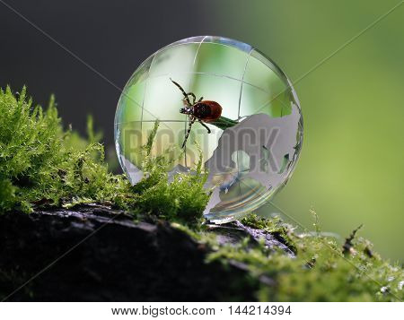 The tick inside a transparent sphere. Concept - encephalitis mites protection parasites