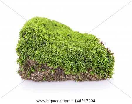 Green moss grow on soil on white background