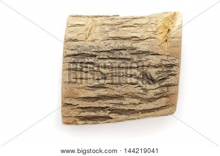 Organic dry wood piece of Horseradish tree (Armoracia rusticana). Isolated on white background. Top view.