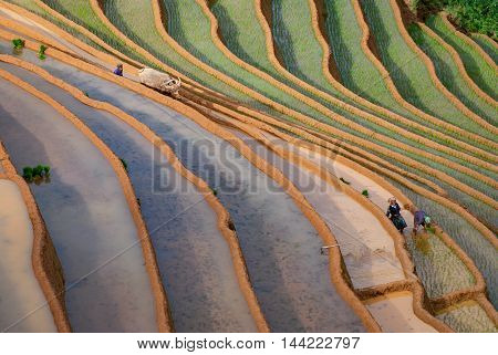 YEN BAI, VIETNAM, July 22, 2016 farmers highland Yen Bai, season rice cultivation, terraced area