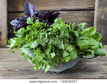 Fresh Herbs In A Strainer, Cilantro, Red And Green Basil
