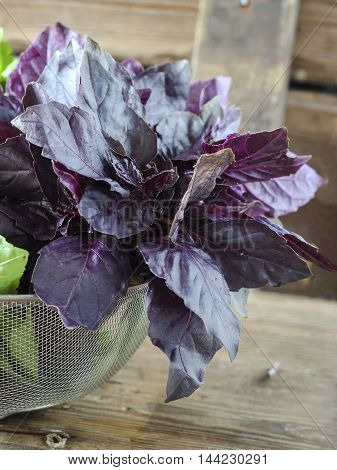 Red Basil In A Strainer