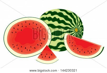 Vector illustration of isolated, fresh, whole watermelon, half and slices of watermelon in color on white background.