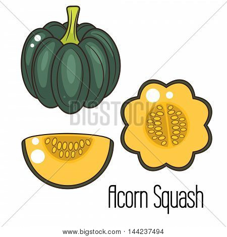 Acorn squash cartoon vector illustration. Green squash whole vegetable and slice.